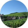Nos ventes en Bourgogne